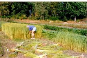 Wenche Olsen dyrker lin